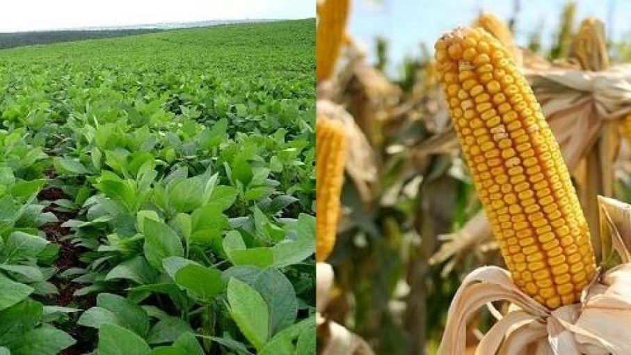 El precio de la soja cayó en Chicago 4,47% a lo largo de 2017, al cerrar en u$s 349,7 por tonelada