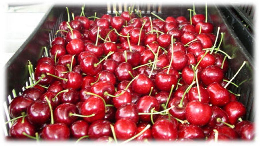 Las cerezas se quedan en Neuquén por bajos precios