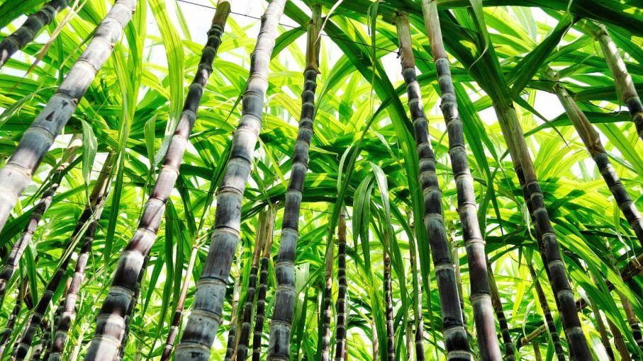 Empresarios azucareros de Tucumán pedirán a la justicia que impida baja en precio del bioetanol