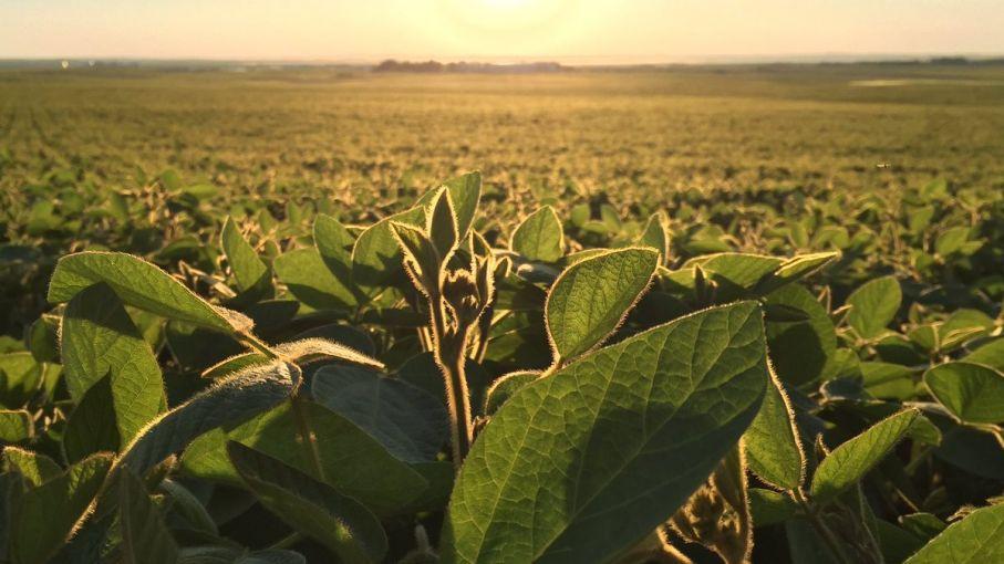 A partir de enero comienza la quita gradual de 0,5% mensual en las retenciones a la soja