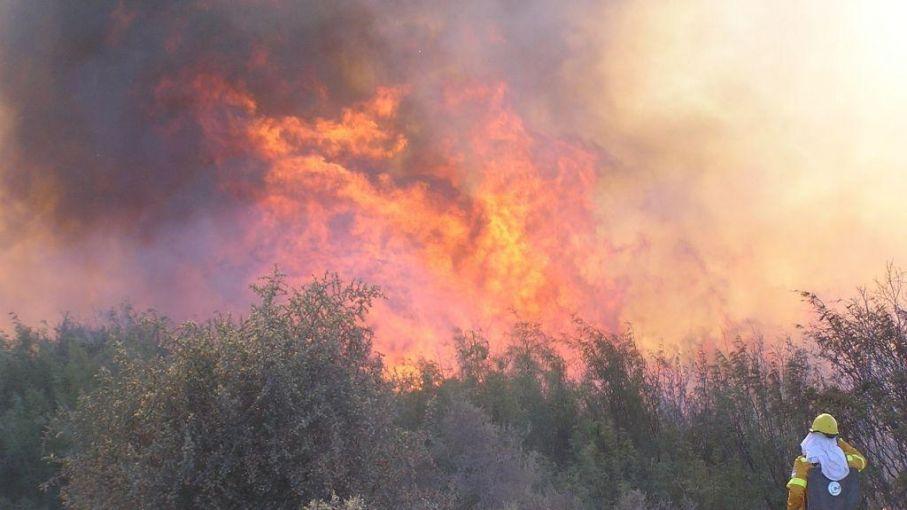 Estiman en 300.000 las hectáreas quemadas en Mendoza y La Pampa