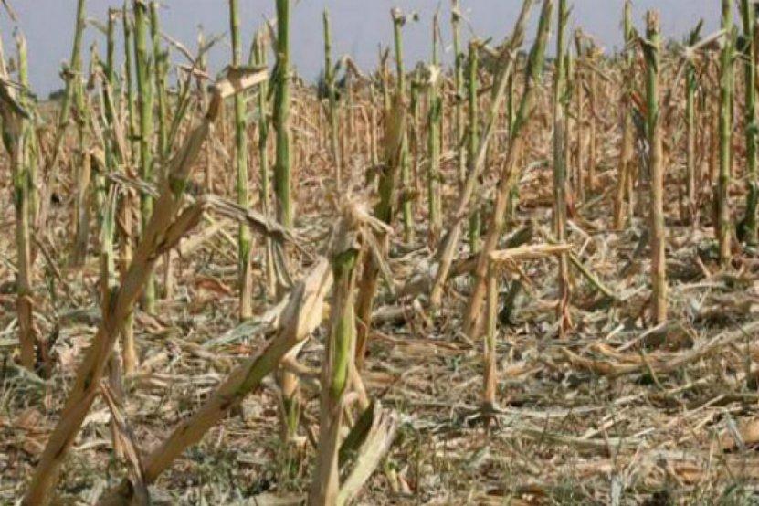 Los resultados de la campaña agrícola en Entre Ríos son deficitarios -  Agritotal
