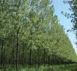 Productores forestales de Buenos Aires cobrarán planes demorados por 8 años