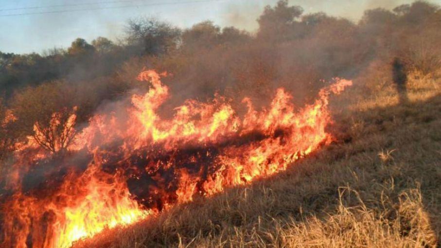 Llegaron los primeros incendios forestales a la Argentina - Agritotal