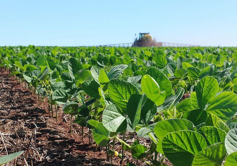 Comienza la siembra de soja con buenas perspectivas de precios - Agritotal