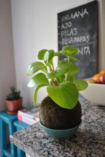 plantas sin maceta - agritotal